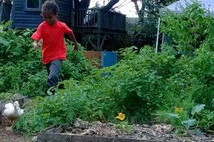 chasing ducks in the children's garden and outdoor classroom in Lorena, TX